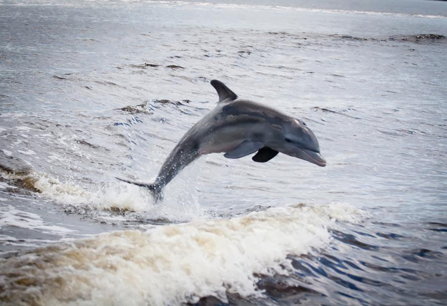 Waterdruppel. Dolfijn