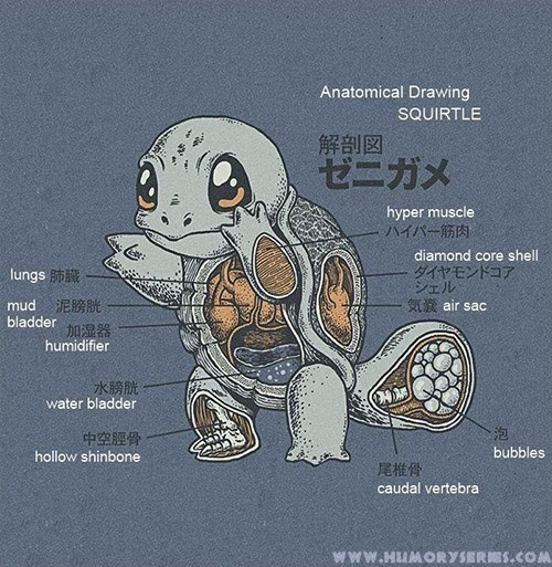 Anatomía Squirtle, Pokemon