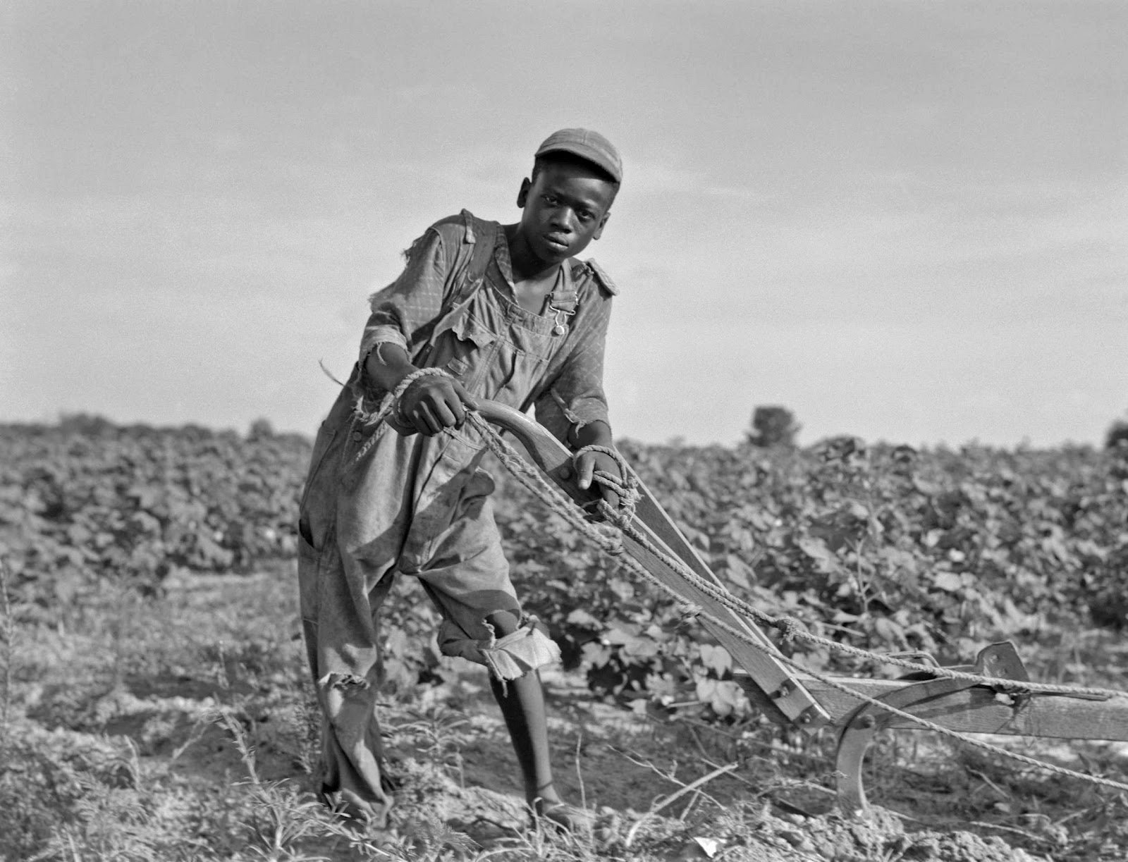 share cropping Get information, facts, and pictures about sharecropping at encyclopediacom make research projects and school reports about sharecropping easy with credible articles from our free, online encyclopedia and dictionary.