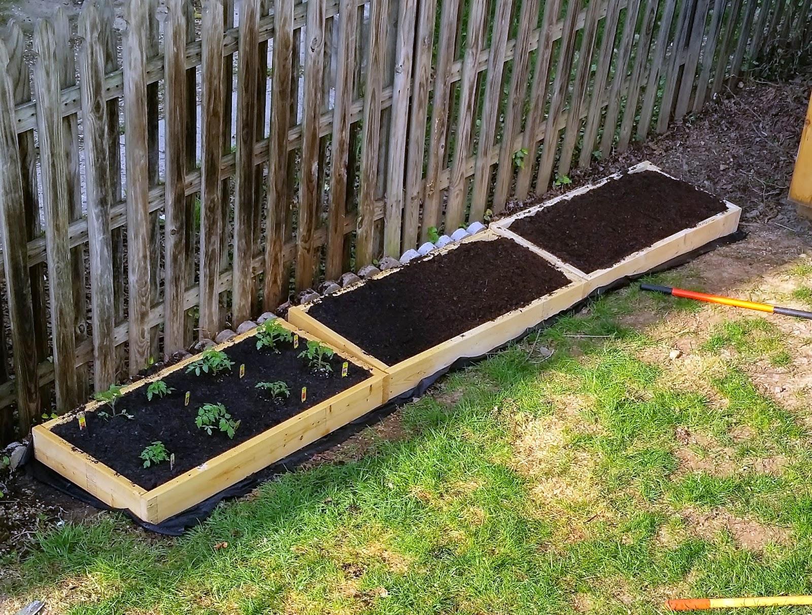 Ben 39 S Journal Gardening Progress Raised Beds Filled X Garden Trampled And Will It Grow