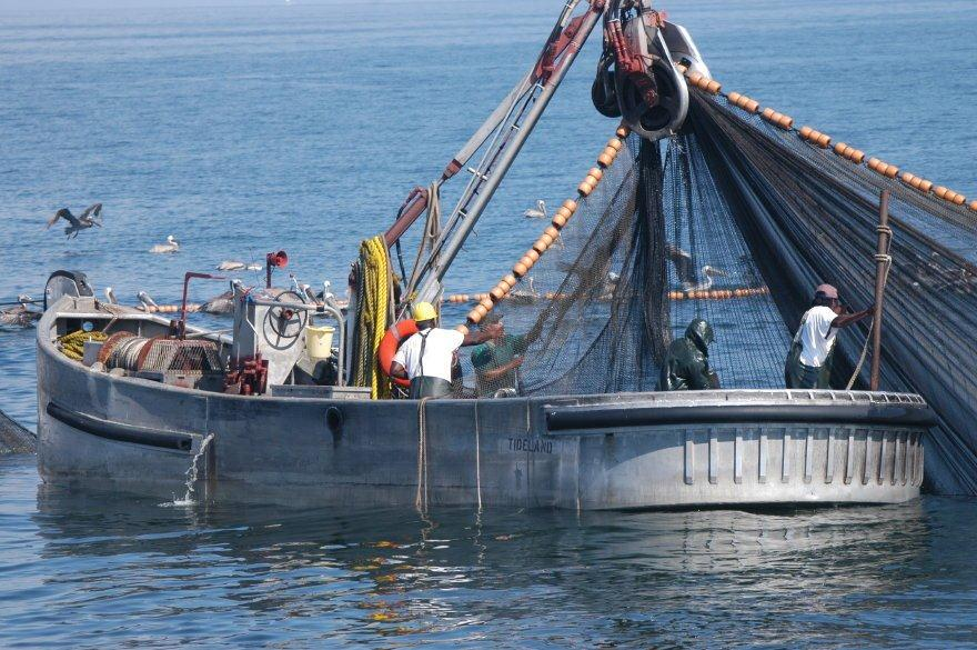 No fluke fishing menhaden hot topic at asmfc this month for Purse seine fishing