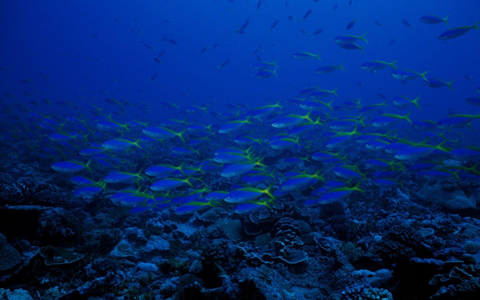 http://2.bp.blogspot.com/-q14hWtUQPnQ/Tj2ObNMi1aI/AAAAAAAAKBA/nrZOhKUATDU/s1600/Sea+Animal+HD+Wallpapers+%25282%2529.jpg