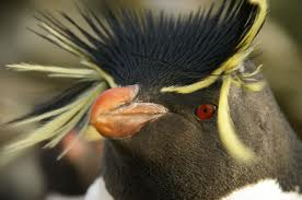 wildlife holidays falkland islands quark expedition penguins