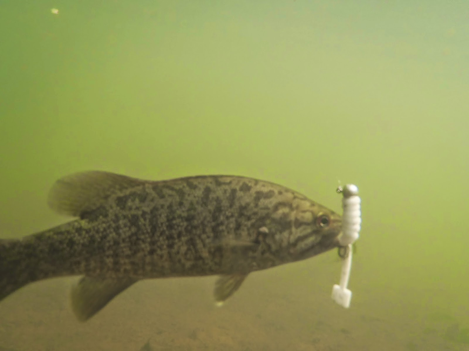 Fishing hunting and life on the chesapeake bay for Hunt fish va
