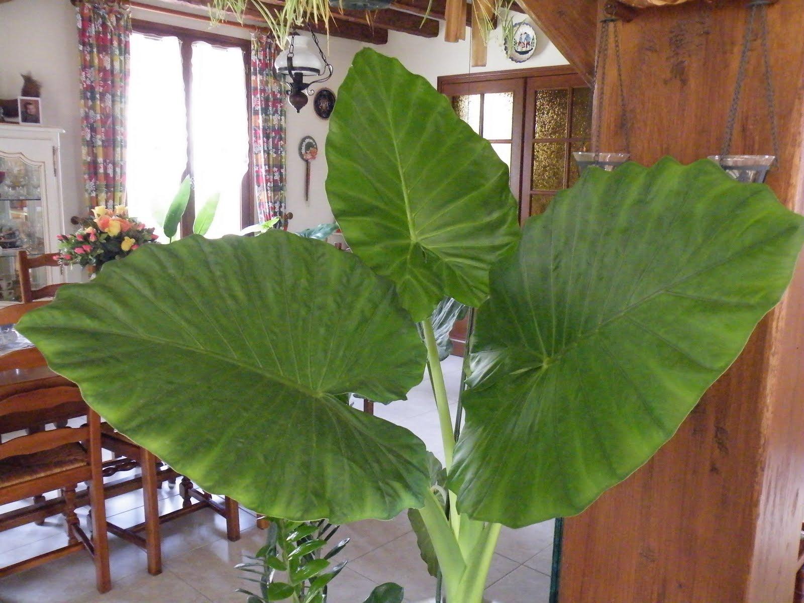 Du four au jardin et mes dix doigts plantes vertes for Plante au jardin