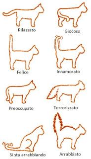 Come capire il linguaggio dei gatti for Il linguaggio dei gatti