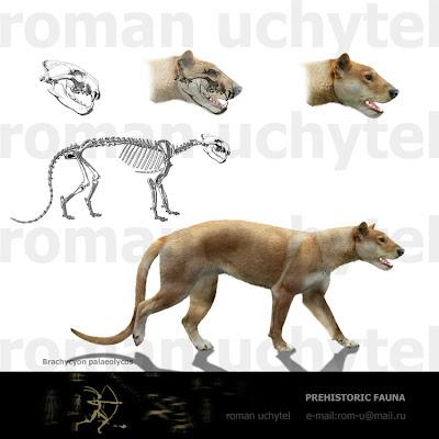 carnivoros prehistoricos Brachycyon