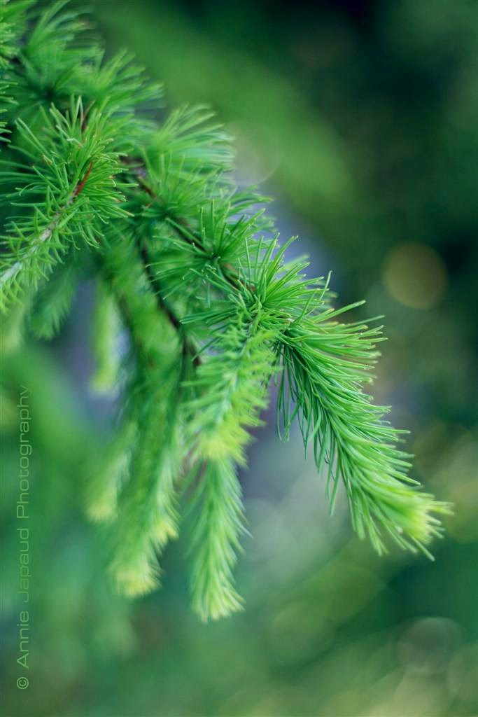 tree branches, green, summer feeling