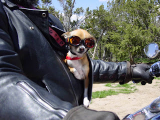Angie Fox Harley Dog 44