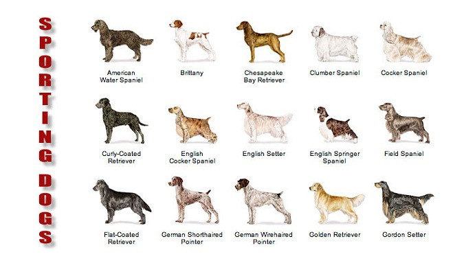 Cute Big Dogs Names