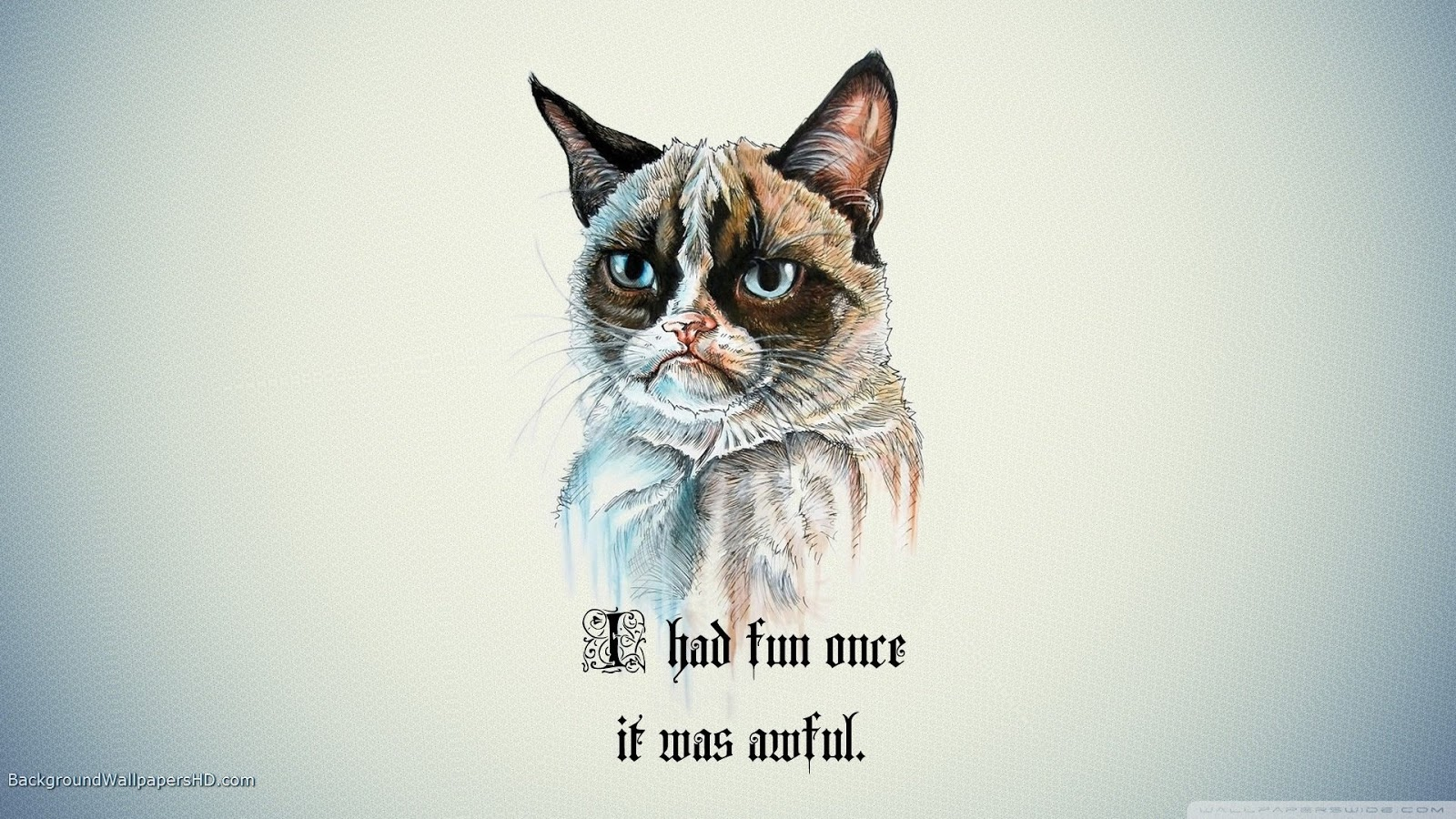 Cool Cat Funny Wallpapers in HD