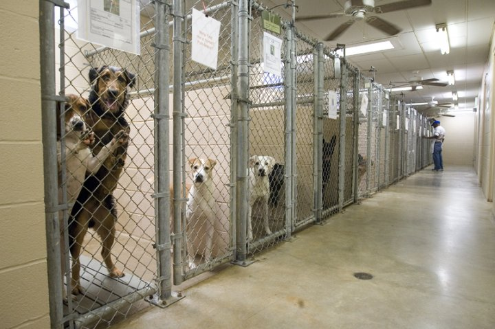 animal shelter dogs