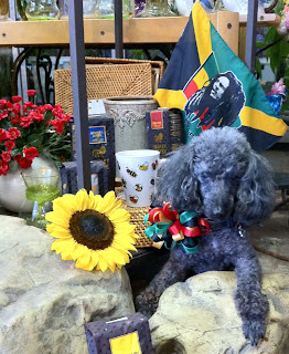 Dog Days of Summer - Stein Your Florist Co.