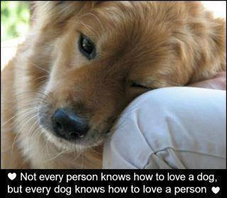 dog knows how to love a person