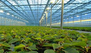 La agricultura es uno de los principales sectores de la economía