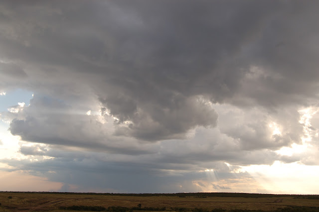 Masai Mara, Kenya, rain