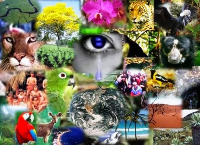 Conceitos básicos em ecologia geral