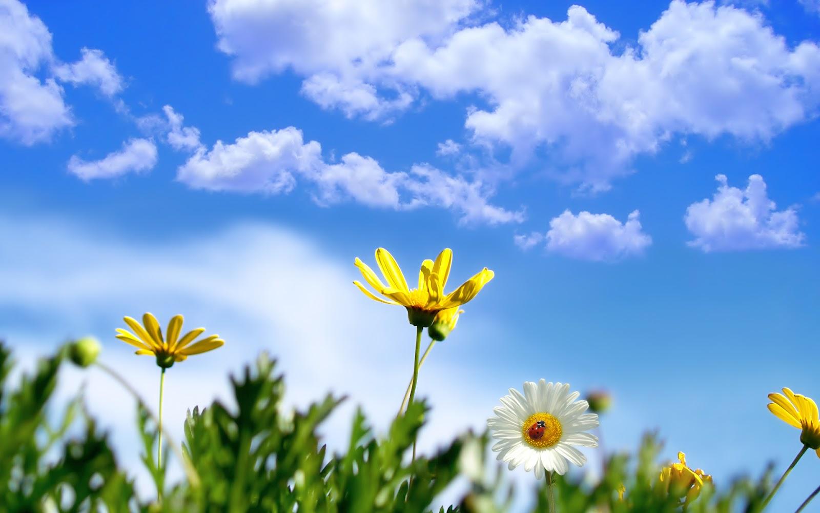 http://2.bp.blogspot.com/-q4PaCzECsJ4/UT9ReUMxFsI/AAAAAAAABzU/a4h6O-7C40Q/s1600/Spring-wallpapers-HD-desktop-background-free-flowers.jpg