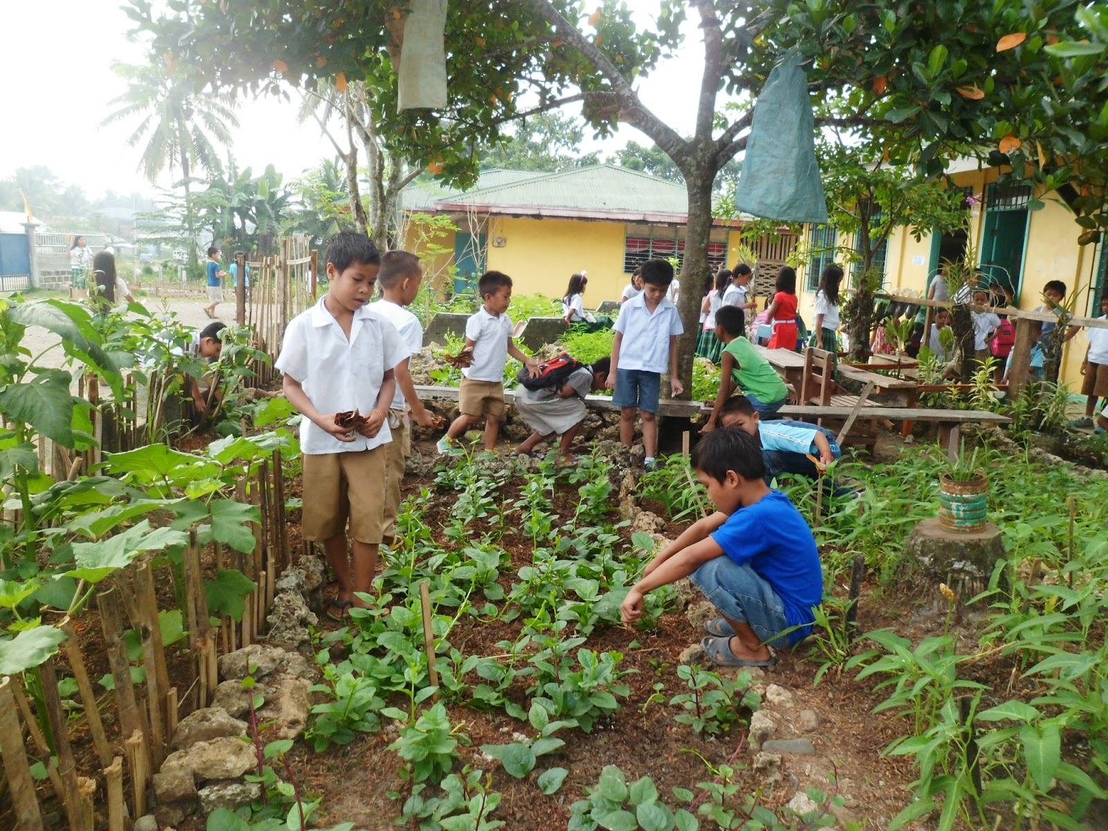 School vegetable gardens - Sawata Ernandcor Central Elementary School Supports The Deped S Program Gulayan Sa Paaralan There Are Vegetable Garden In The