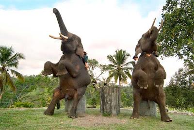 Komunikasi gajah