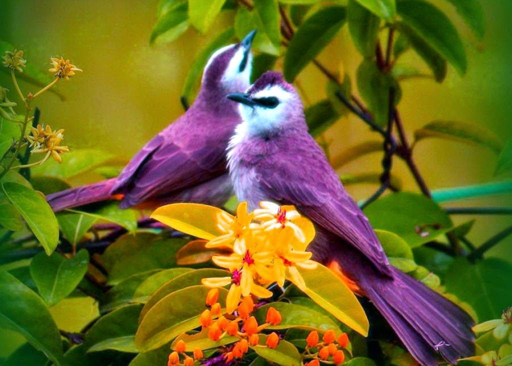 Cute Colorful Birds Wallpaper