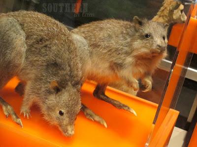 Australian Mammals - Australian Museum Sydney