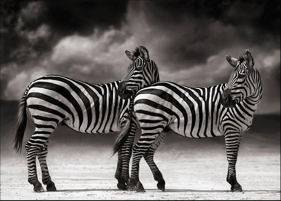 foto artistica animal:
