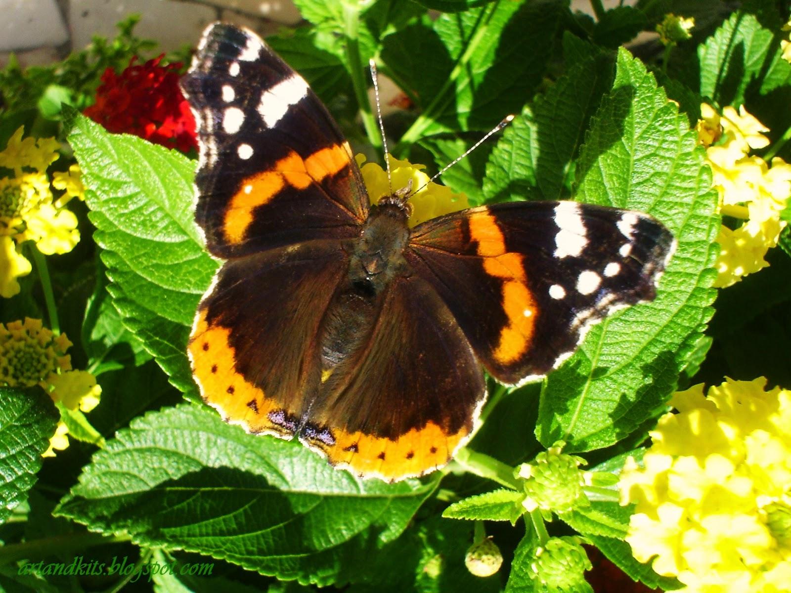 Arte, natureza, vida, beleza... Temas que por aqui, e sempre que possível, andam entrelaçados no nosso blogue... / Art, nature, life, beauty... Themes that around here, and whenever possible go hand together on our blog...