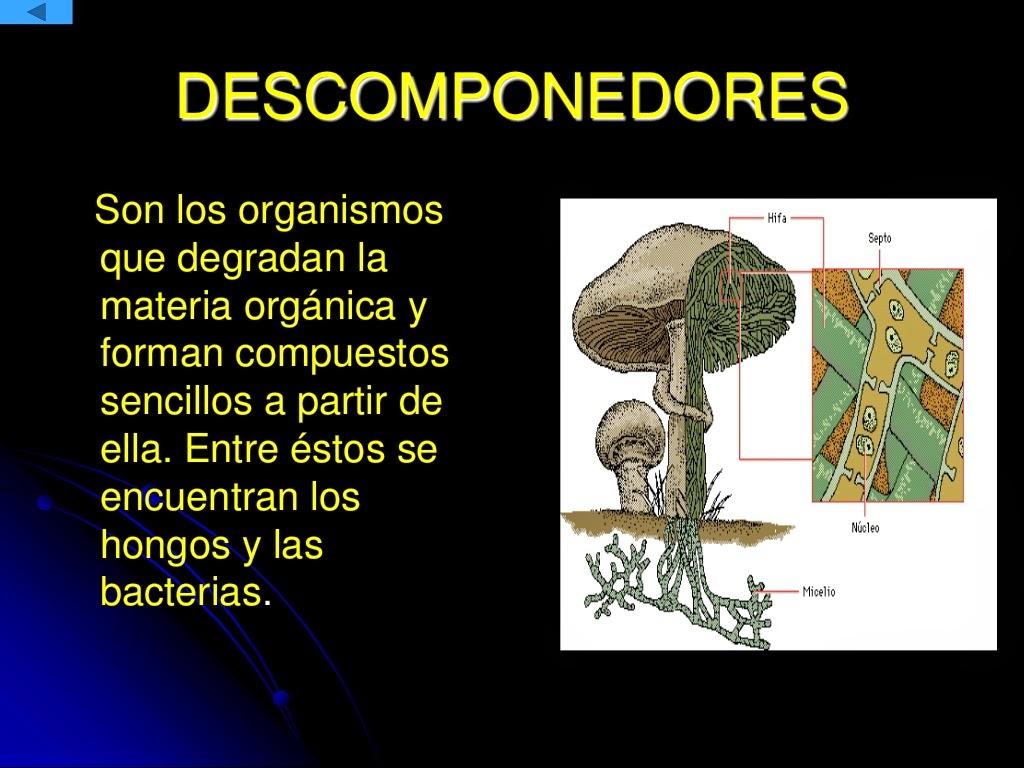 Resultado de imagen de Todos los animales, plantas y microbios están compuestos fundamentalmente, por las denominadas sustancias orgánicas