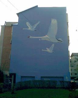Graffiti Iasi de lebede