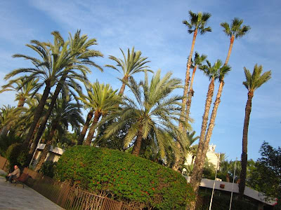 Palms in Elche