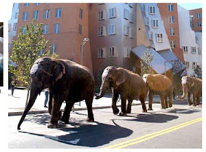 And as elephants parade