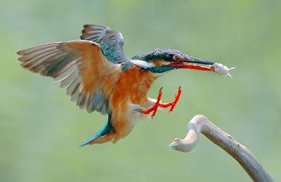 Pajarillos comiendo by Mario Testino (10 fotos de aves)