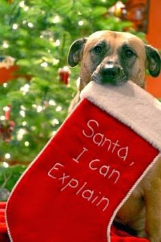Christmas Quotes about Dogs