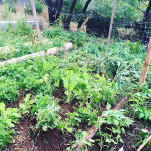 Gardening 2017