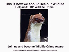 Wildlife Crime