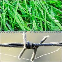 Orvalho na grama e Geada no arame farpado