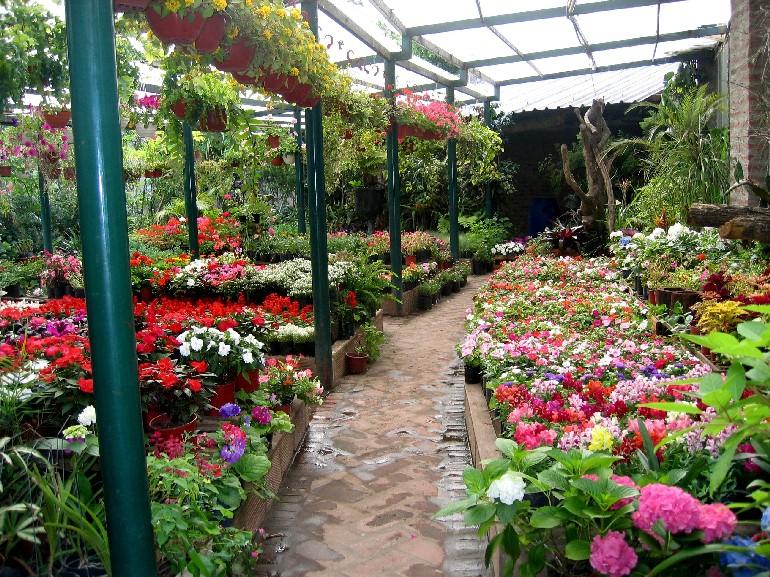 Venta de plantas ornamentales ideas de negocios ok for Viveros en queretaro