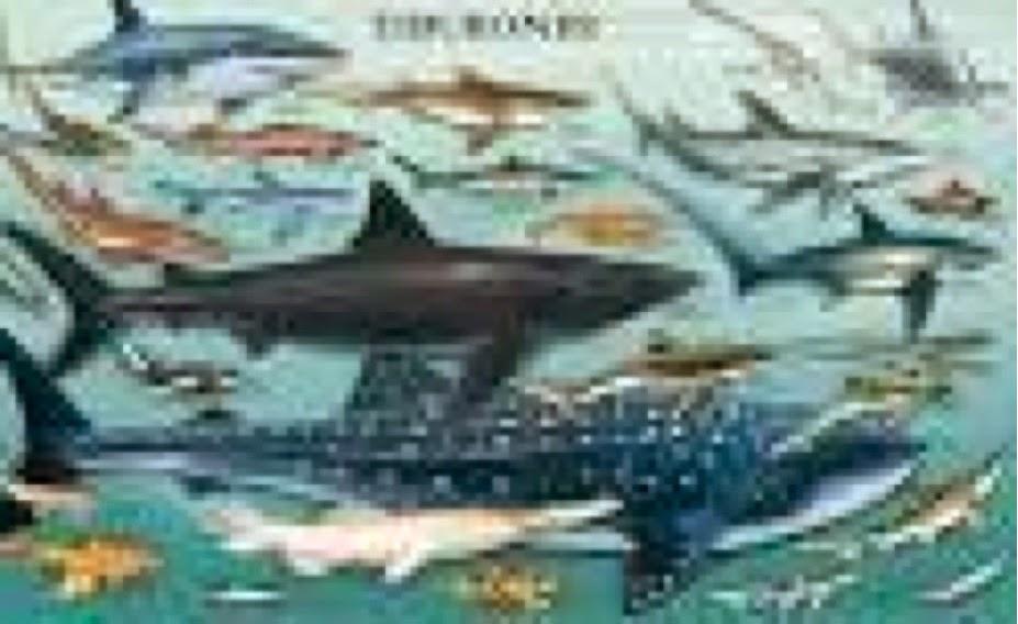 Vampiro Erudito: Tiburones