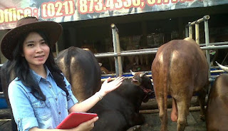 SPG Cantik Ala Koboi Jadi Penjual Hewan Qurban