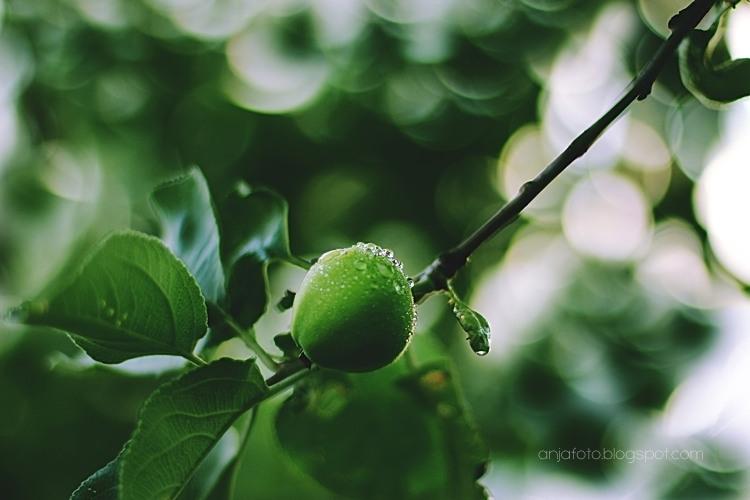 jabłko, zielone jabłuszko, bokeh, bokeh photography