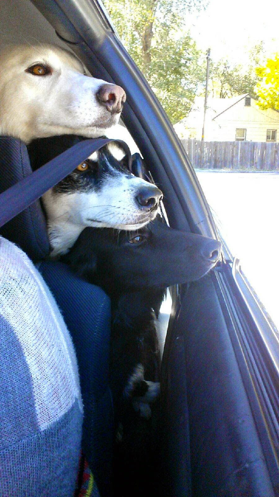 adorable dog pictures, puppy photos, funny dogs