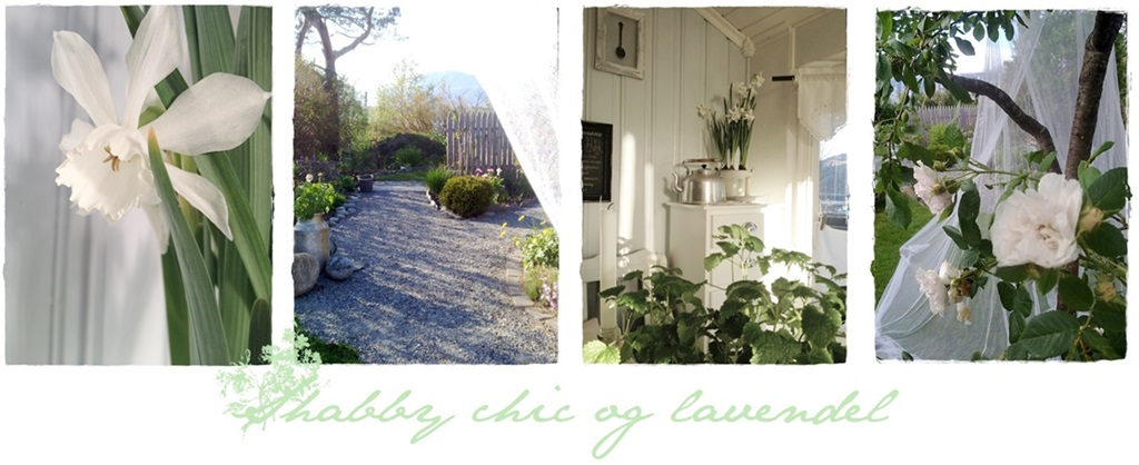 shabby chic og lavendel