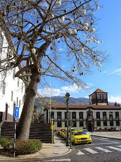 ceiba, Plaza Municipal, Praça do Municipio, Funchal, Madeira, Portugal, La vuelta al mundo de Asun y Ricardo, round the world, mundoporlibre.com