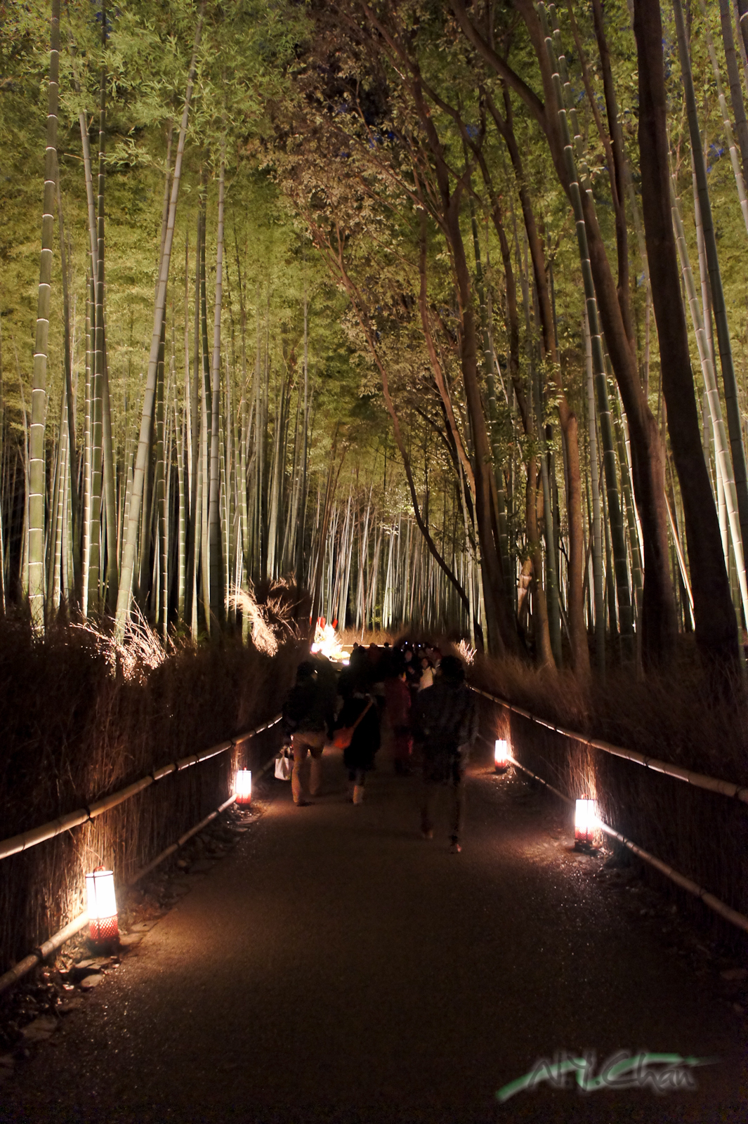 sagano bamboo forest  u2013 japan  u2013 world for travel
