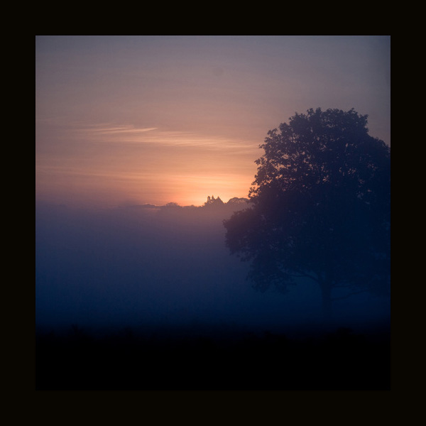 Richmond Park, Dawn by Mark Simms, as seen on linenandlavender.net Take me there. http://www.linenandlavender.net/p/blog-page_5.html