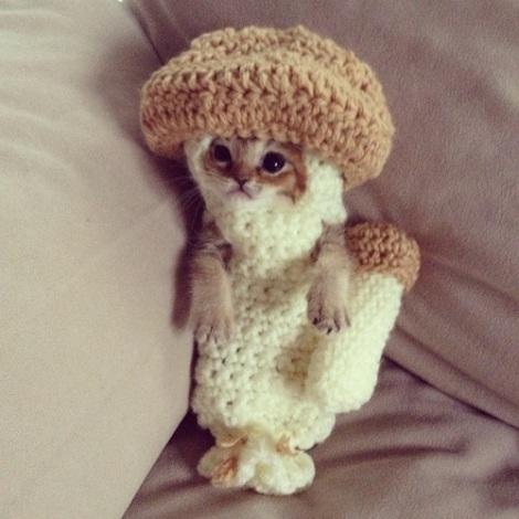 Wasabi-chan wearing mushroom crochet costume