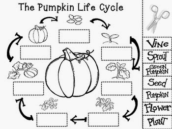 Amazing image for life cycle of a pumpkin printable