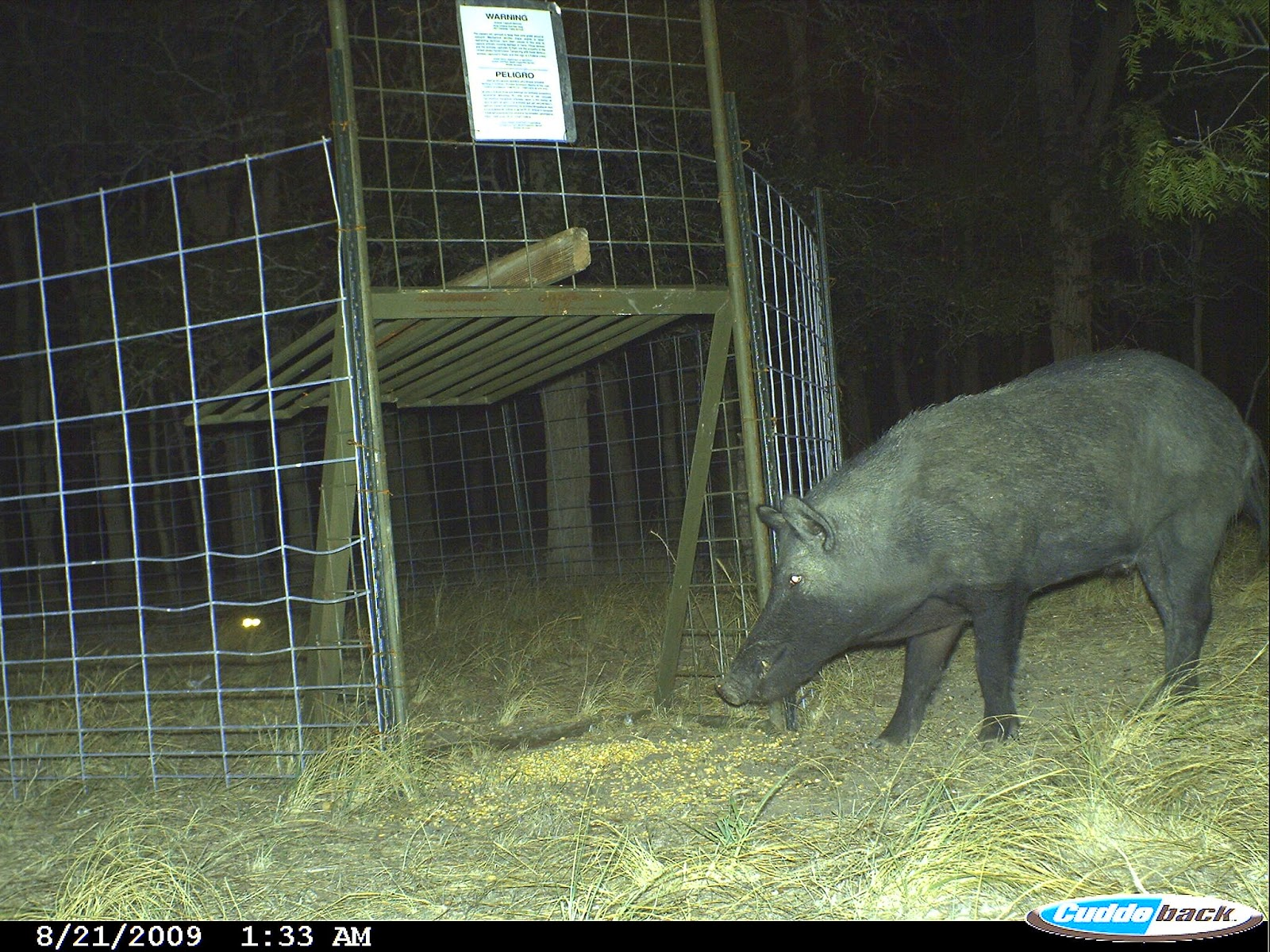 Pig Trap Door Mechanism Image Gallery Hog Trap Gates
