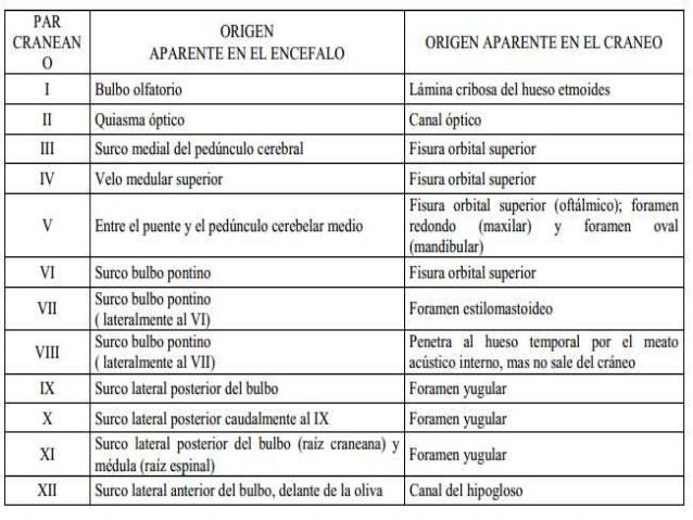 El extra o pa s del hno gamaliel gorostieta los 12 pares for 12 paredes craneales